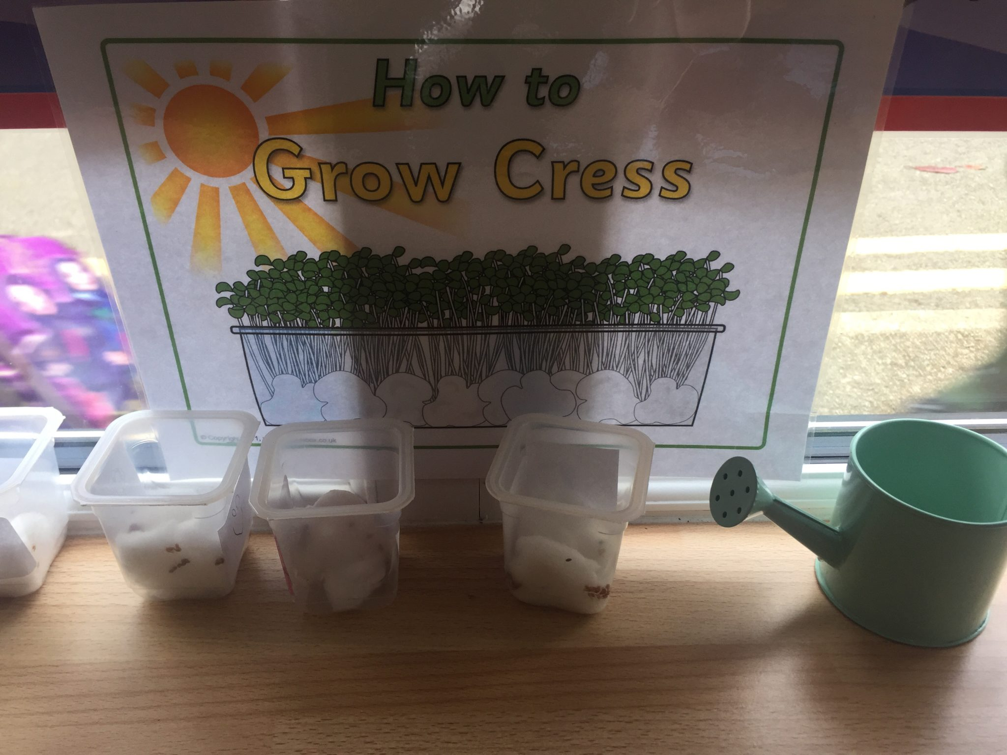 We're growing Cress! – Ms Alison Johnston – Junior Infants